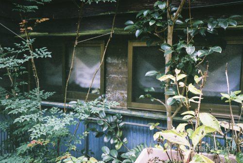 杖立温泉の背戸屋を散歩